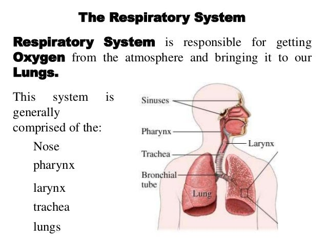 Health risks of a weak respiratory system?
