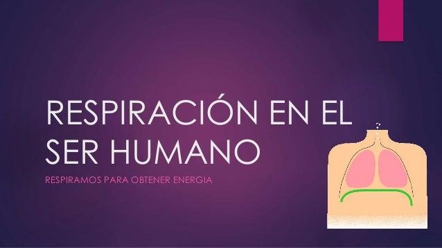 RESPIRACIÓN EN EL SER HUMANO RESPIRAMOS PARA OBTENER ENERGIA