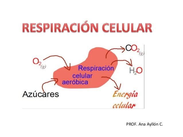 5 ejemplos de metabolismo anabolico