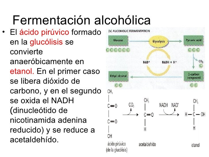 El torpedo del alcoholismo que este tal vikipediya