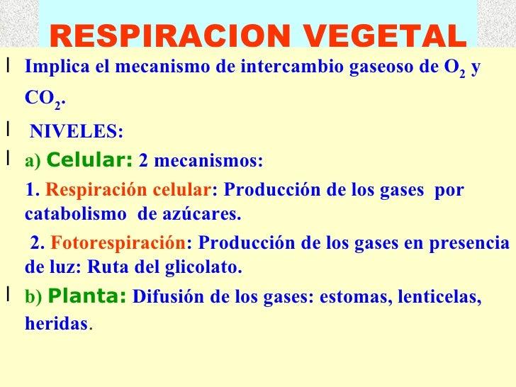 RESPIRACION VEGETAL <ul><li>Implica el mecanismo de intercambio gaseoso de O 2  y CO 2 . </li></ul><ul><li>NIVELES: </li><...