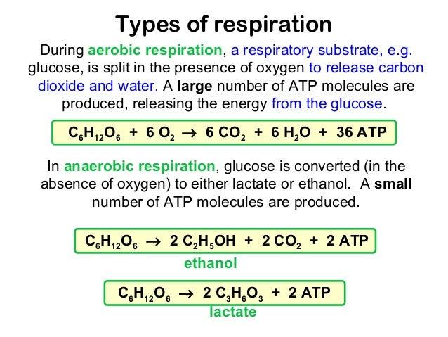 combustion worksheet