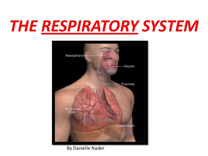 THE RESPIRATORY SYSTEM<br />By Danielle Nader<br />