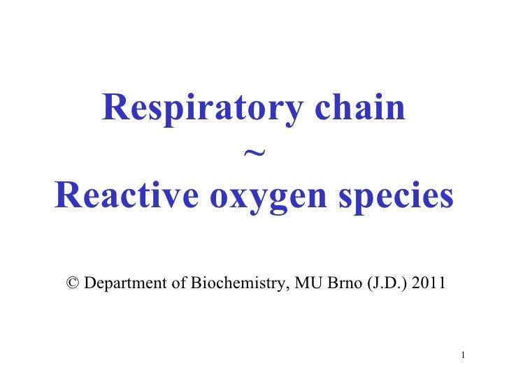 Respiratory chain