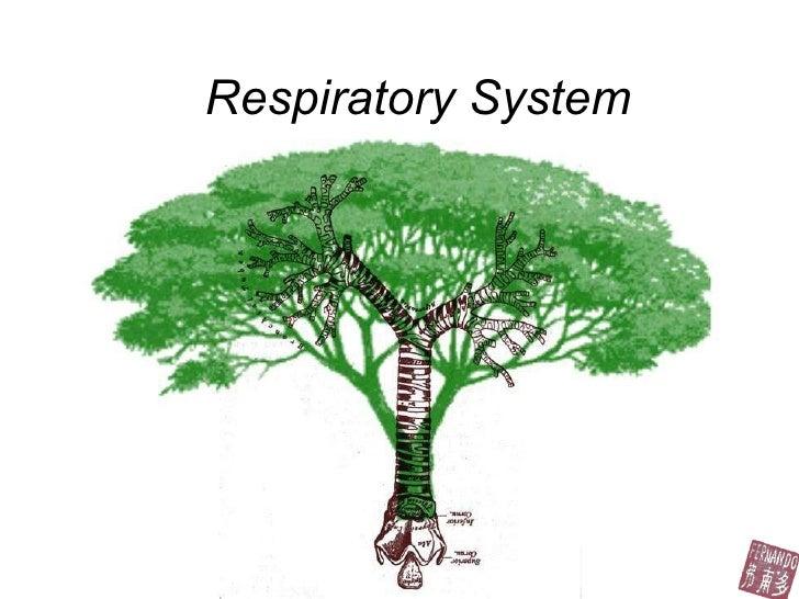 Respiratory Fernando