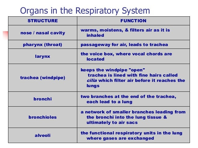 Parts functions of the respiratory Research paper Help ...