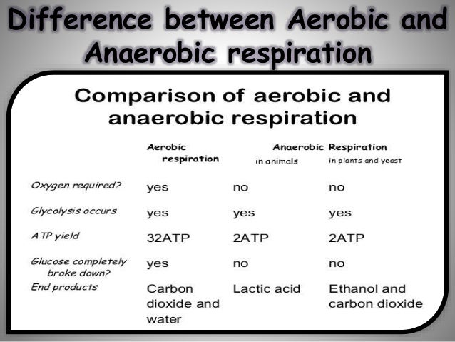 Difference Between Aerobic And Anaerobic