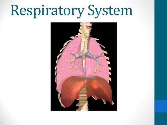Respiratory system2