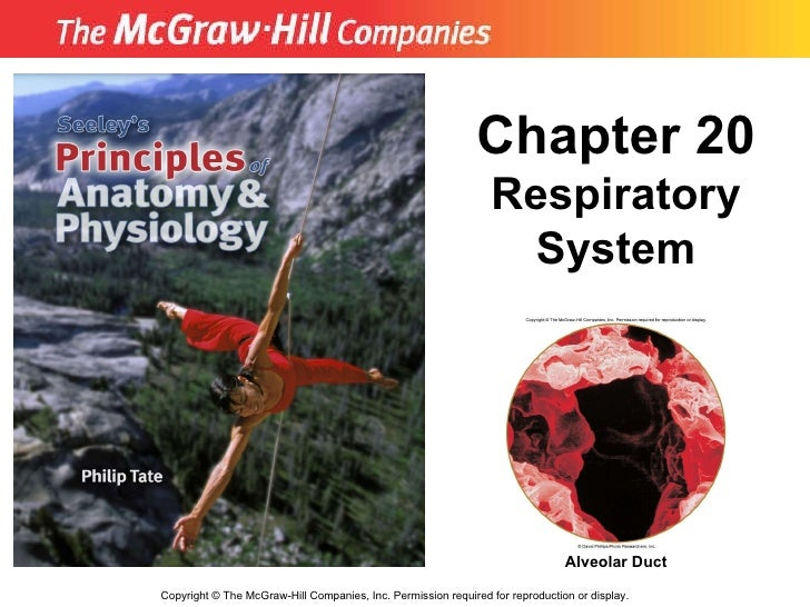 Copyright  ©  The McGraw-Hill Companies, Inc. Permission required for reproduction or display. Chapter 20 Respiratory Syst...