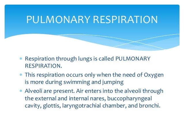 Difference between fish respiration and human respiration?