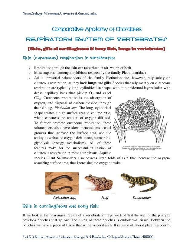 Notes: Zoology- VI Semester, University of Mumbai, India.  Comparative Anatomy of Chordates Respiratory System of Vertebra...