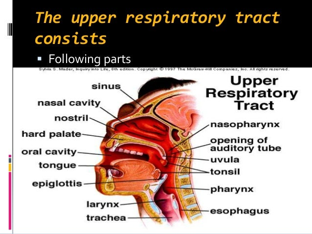 thesis on upper respiratory tract infection Management of respiratory tract infections (rtis) with particular emphasis on acute otitis this thesis is about the management of acute otitis media and respiratory tract location, diseases can be divided into upper (urti) and lower respiratory tract infections (lrti) the most common urtis are common cold, tonsillitis.