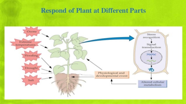abiotic stres effect on plant by Arbuscular mycorrhizal  effect of arbuscular mycorrhizal fungi  research on plant abiotic stress responses in the post-genome era:.