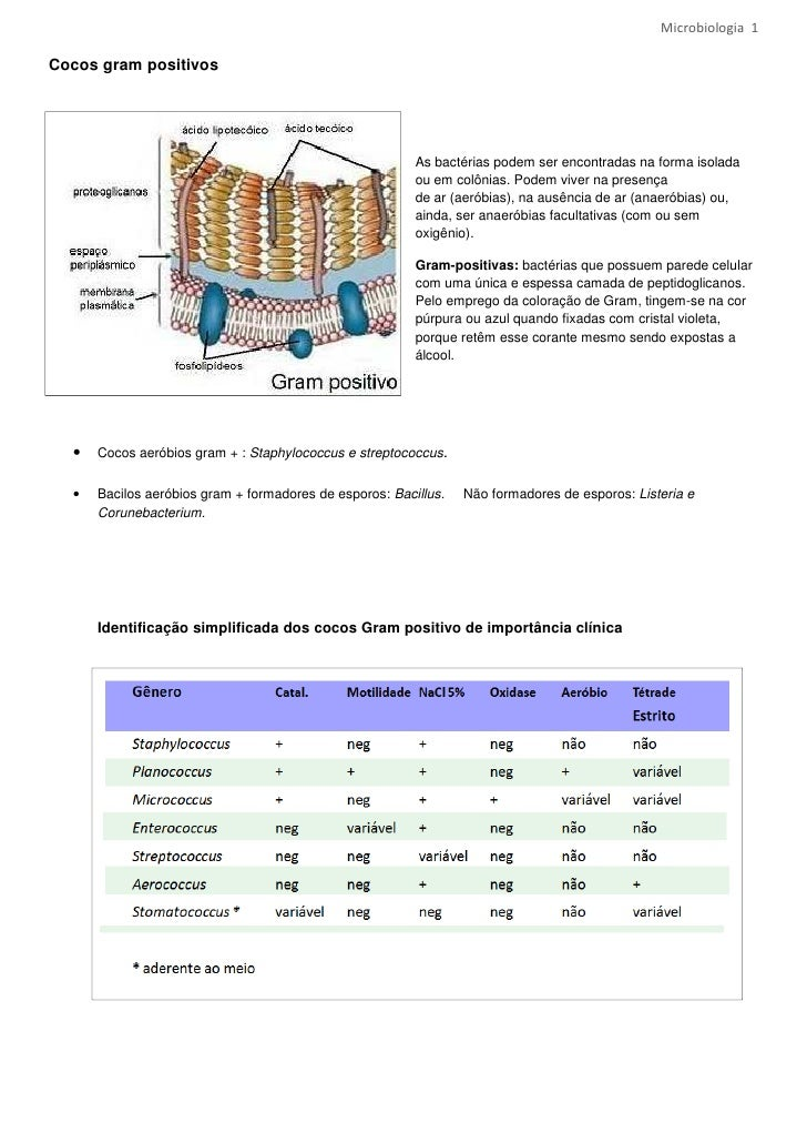 Microbiologia 1Cocos gram positivos                                                         As bactérias podem ser encontr...