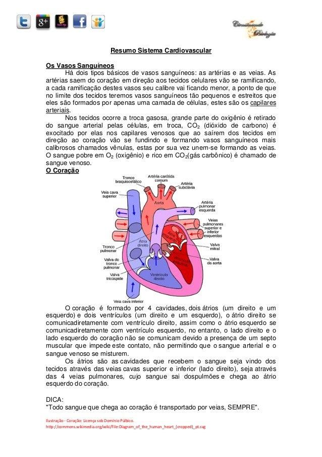 Ilustração - Coração: Licença sob Domínio Púlbico. http://commons.wikimedia.org/wiki/File:Diagram_of_the_human_heart_(crop...
