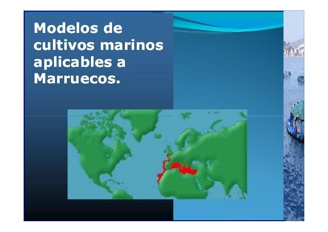 MODELOS DE CULTIVOS APLICABLES A MARRUECOS, en Jornada Rabat del 17 abril 2013