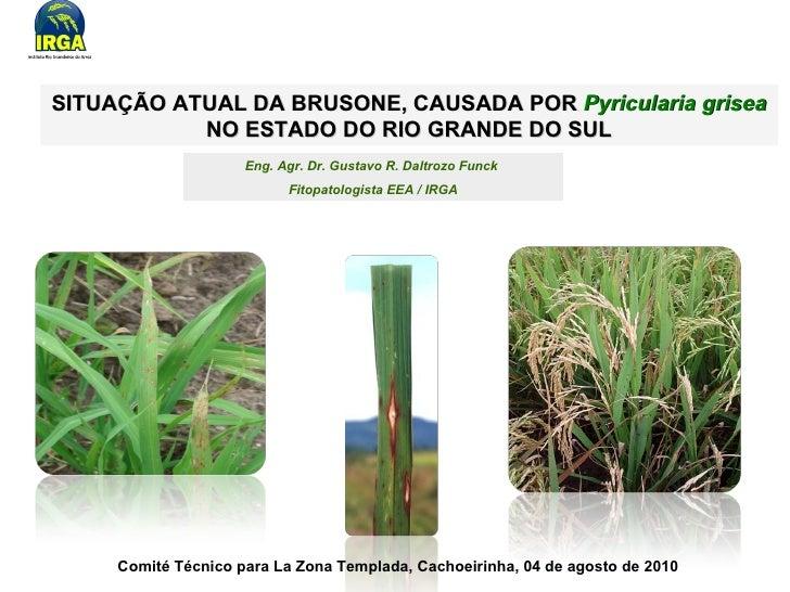 SITUAÇÃO ATUAL DA BRUSONE, CAUSADA POR   Pyricularia grisea  NO ESTADO DO RIO GRANDE DO SUL Eng. Agr. Dr. Gustavo R. Daltr...