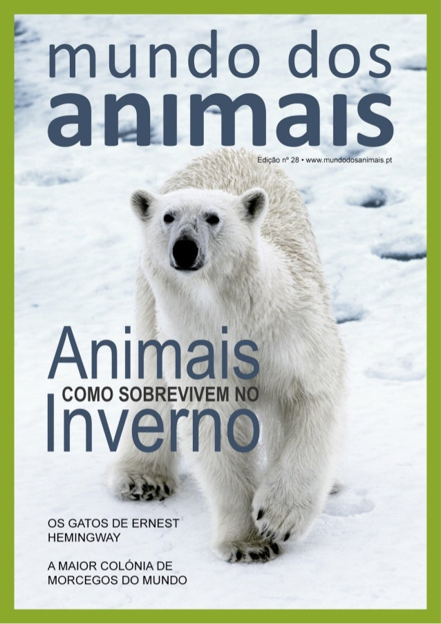 """""""Para os humanos, o Ártico é um lugar severo e inóspito, mas tem precisamente as condições que os ursos polares requerem p..."""