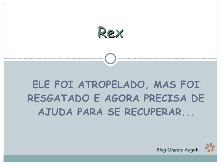 ELE FOI ATROPELADO, MAS FOI RESGATADO E AGORA PRECISA DE AJUDA PARA SE RECUPERAR... Rex Blog Omnes Angeli