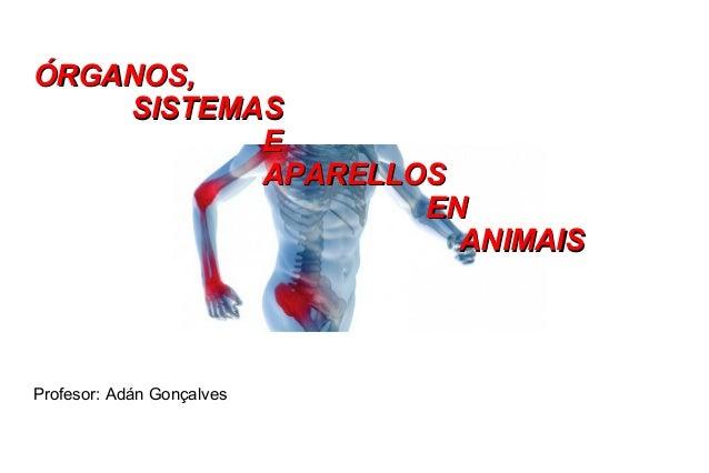 Órganos e aparellos en animais (introdutorio)