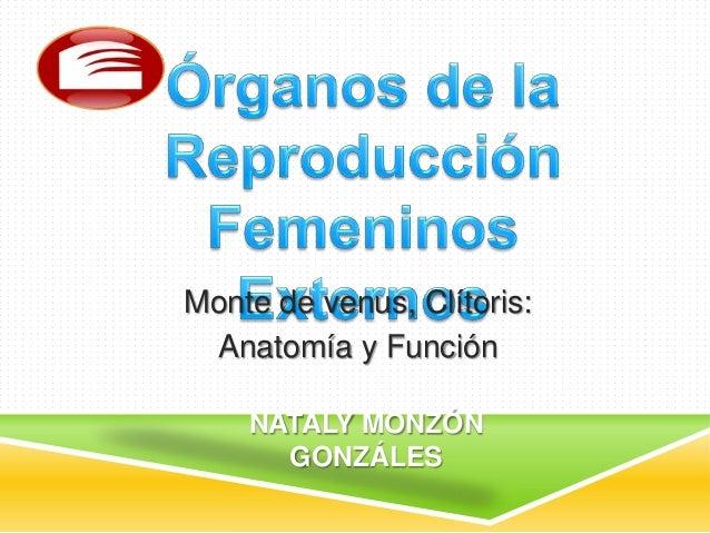 Monte de venus, Clítoris:Anatomía y FunciónNATALY MONZÓNGONZÁLES