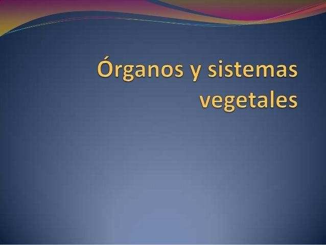 Niveles de organización de las plantas  Célula vegetal  Tejidos vegetales  Órganos vegetales:  Sistemas vegetales:  R...
