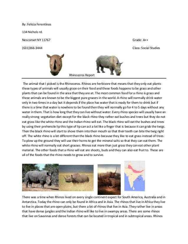 Rhino report part 2 for social studies 2
