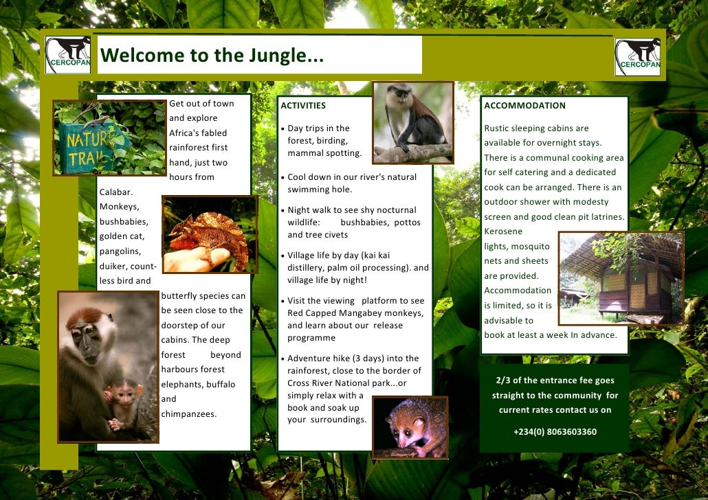 Welcome to the Jungle...                    Get out of town        ACTIVITIES                               ACCOMMODATION ...