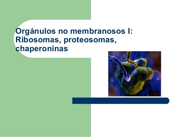 Orgánulos no membranosos I:Ribosomas, proteosomas,chaperoninas
