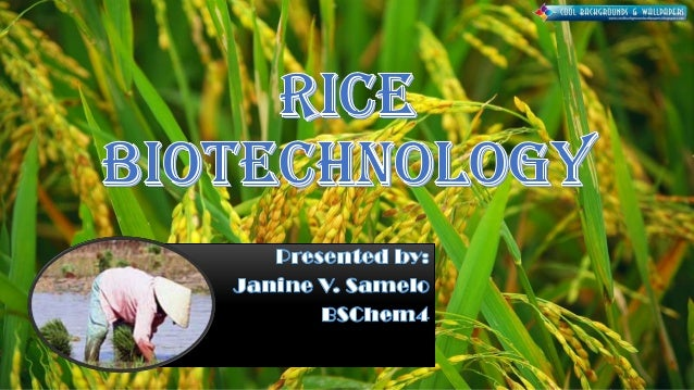 Rice(Oryza sativa) is one of the most important cereal crops, providing staple food for nearly one-half of the global popu...