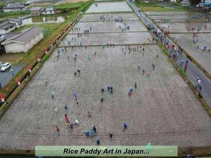 Rice Paddy Art in Japan...