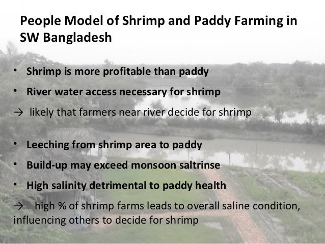 People Model of Shrimp and Paddy Farming in    SW Bangladesh     Shrimp is more profitable than paddy     River water ac...