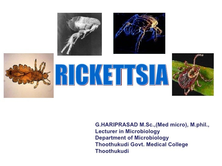RICKETTSIA G.HARIPRASAD M.Sc.,(Med micro), M.phil., Lecturer in Microbiology  Department of Microbiology  Thoothukudi Govt...