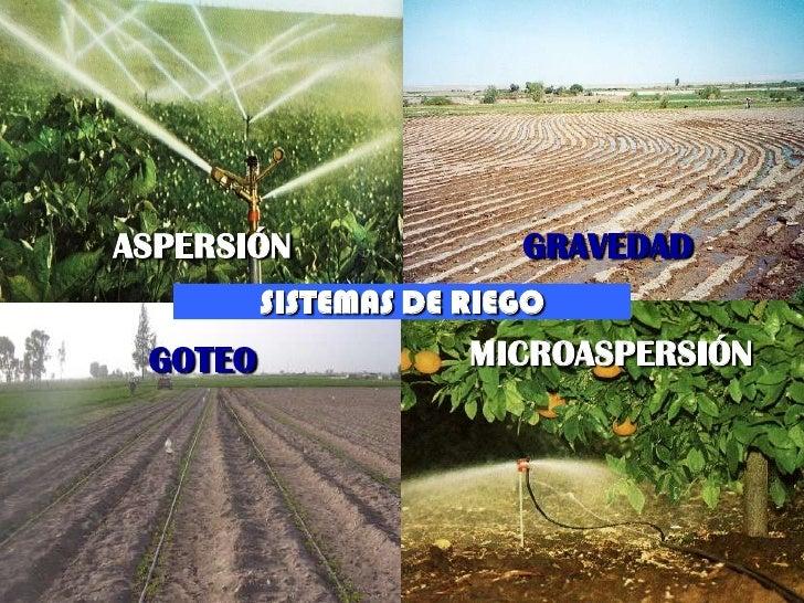 ASPERSIÓN                                  GRAVEDAD                      SISTEMAS DE RIEGO              GOTEO             ...