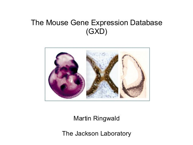 Expression Mouse The Mouse Gene Expression