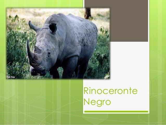 RinoceronteNegro