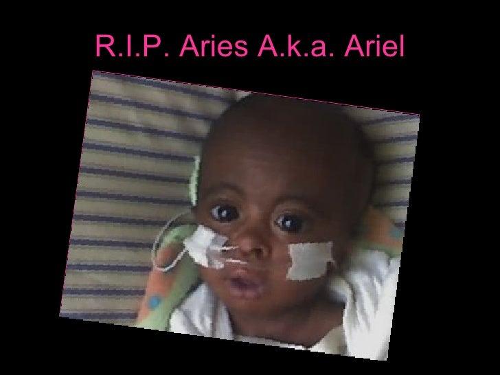 Rip Aries