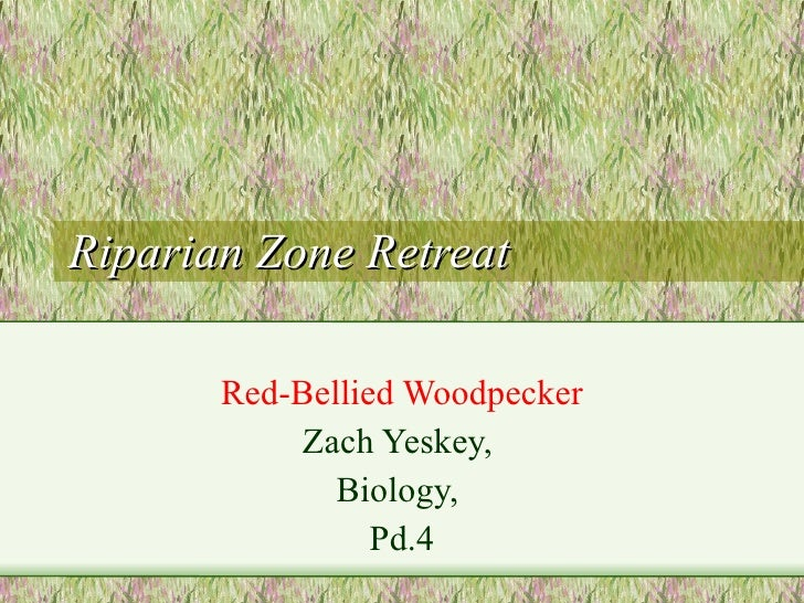 Riparian Zone Retreat Red-Bellied Woodpecker Zach Yeskey,  Biology,  Pd.4