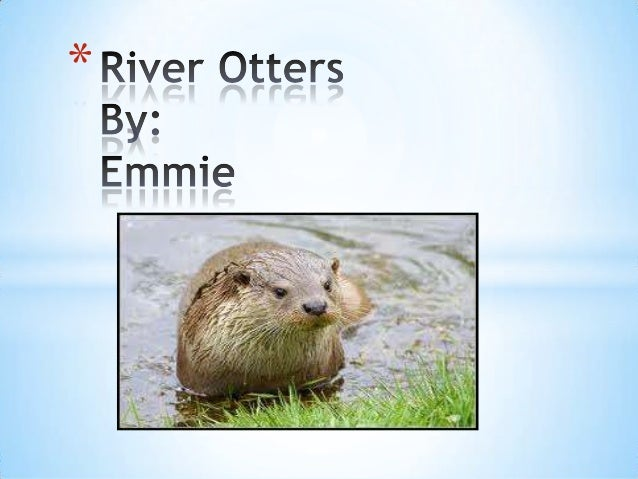 River otters#12