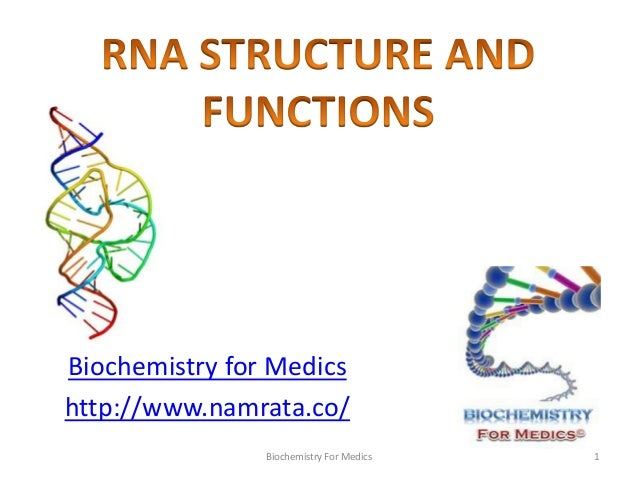Rna structure types and functions