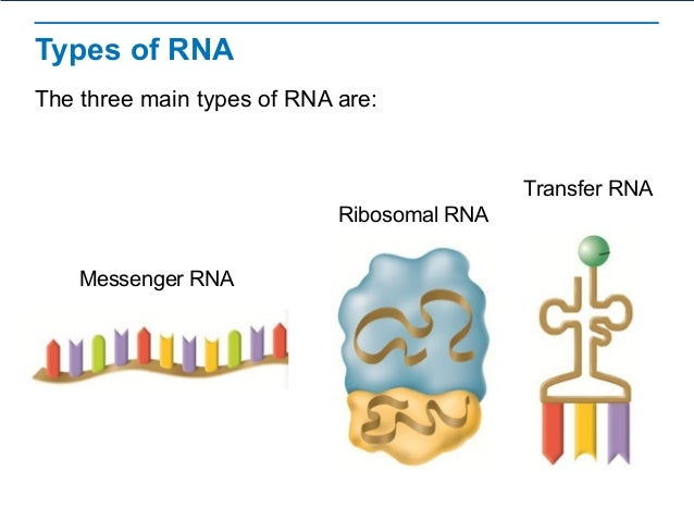 What is the central dogma of dna