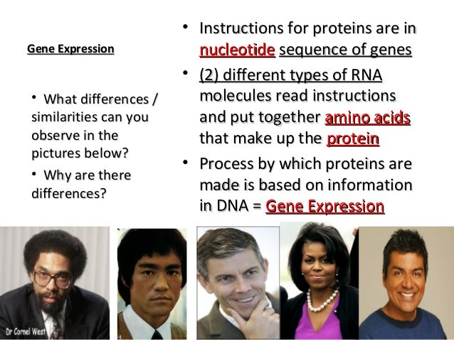 Anatomy and Physiology RNA and Proteins