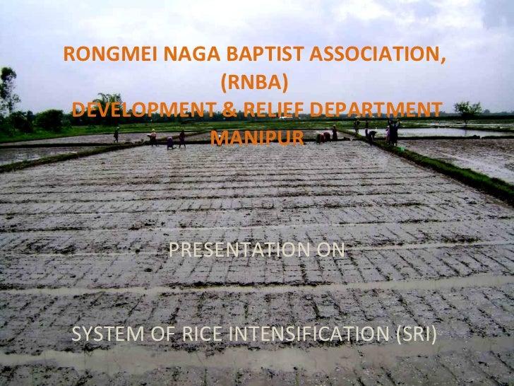 RONGMEI NAGA BAPTIST ASSOCIATION,  (RNBA)   DEVELOPMENT & RELIEF DEPARTMENT  MANIPUR PRESENTATION ON   SYSTEM OF RICE INTE...
