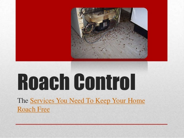 Roach Control The Services You Need To Keep Your Home Roach Free
