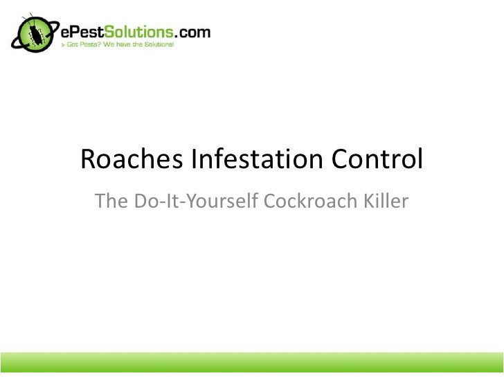 Roaches Infestation Control - The Do-It-Yourself Cockroach Killer