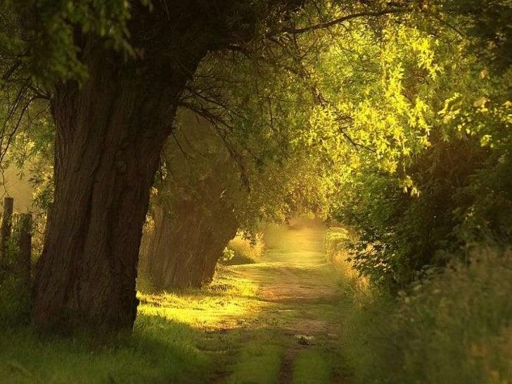 森林道路 Roads