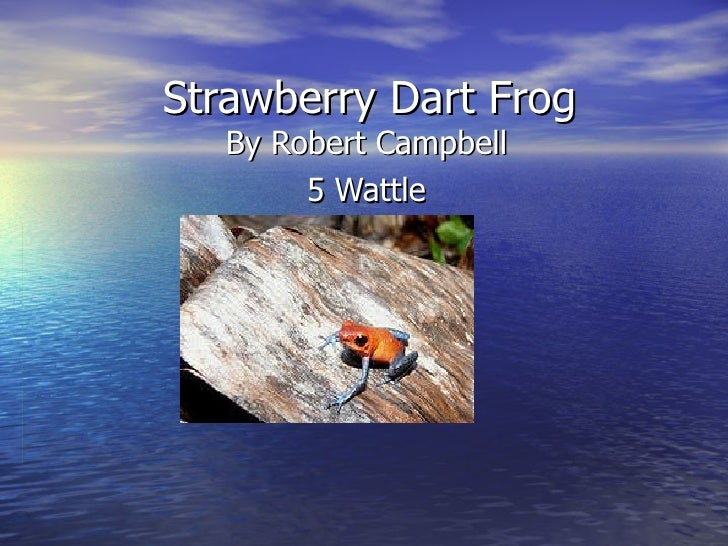 Robert c strawberry dart frog
