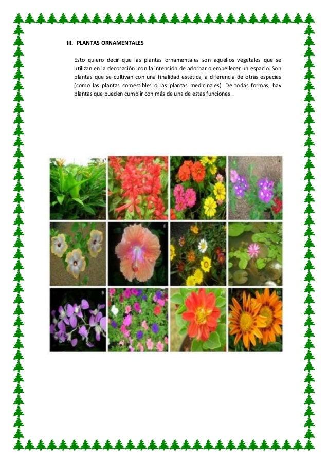 Utilidad de las plantas for Cuales son las plantas ornamentales