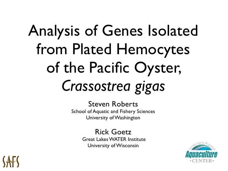 Oyster Hemocytes - NSA 2009