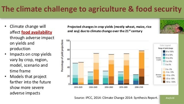thesis on climate change and food security For critical sectors, and development of a national climate change strategy that  clearly  climate change impacts on agriculture and food security climate.